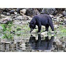 Bear reflection  Photographic Print
