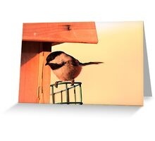 Sunlit Chickadee Greeting Card