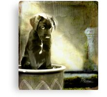 Paws For Thought Canvas Print