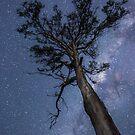 Starry Starry Night - Bundamba Qld Australia by Beth  Wode