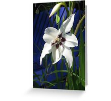 Orchid Lily Greeting Card