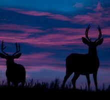 Cost of Watching the Sunrise...Two Bucks by peaceofthenorth