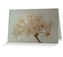 Blossoming Pear Tree Greeting Card