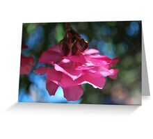 Oleander sweetness  Greeting Card
