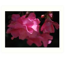 Oleander Hope Art Print