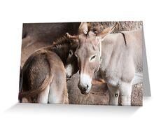 donkey in the farm Greeting Card