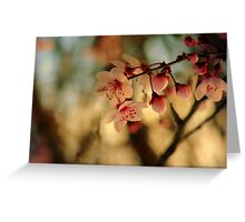 Blossoms & Light Greeting Card