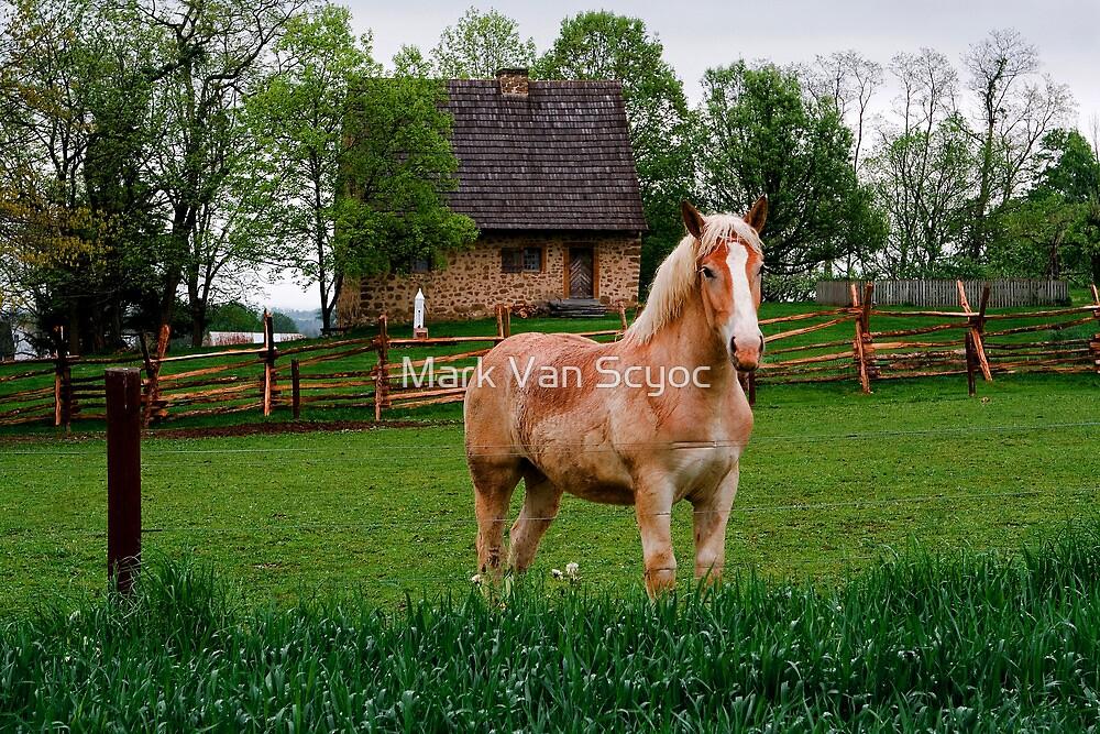 Horse at Hans Herr House by Mark Van Scyoc