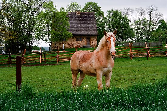 Horse at Hans Herr House by Mark Van Scyoc