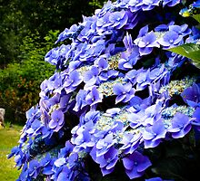 Hydrangea with Buddha by Denice Breaux