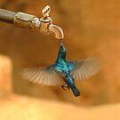 Thirst by Mukesh Srivastava