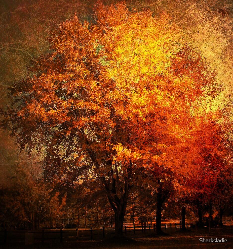 Missing Tree by Sharksladie