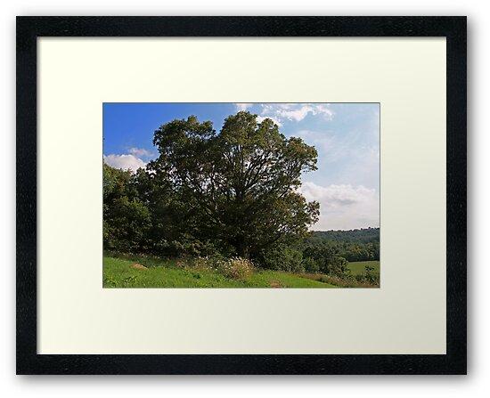 Hilltop Monarch by Geno Rugh