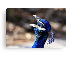 Singing for the Crowds Canvas Print