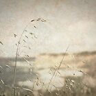 Grass on the Cliffs II by Kevin Bergen