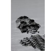 Prehistoric / Alligator Abstract Photographic Print