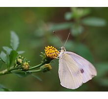 Insect Eating Photographic Print