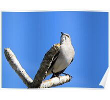 Mocking Bird out on a Limb Poster
