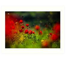 still love poppies Art Print