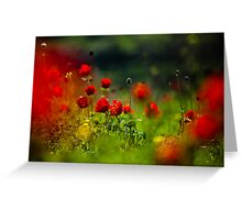 still love poppies Greeting Card