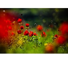 still love poppies Photographic Print