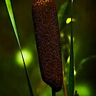 Bulrush by Sue Ratcliffe