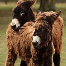 Hairy Buddies by Mark Hughes