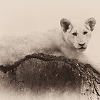 White Lion by Gertmint