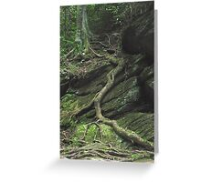 Gnarled Tree Roots - Smoky Mountains Greeting Card