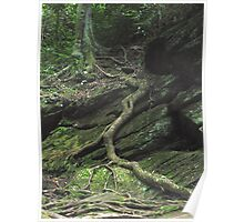 Gnarled Tree Roots - Smoky Mountains Poster