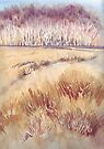 Grasses on Strensall Common by Val Spayne