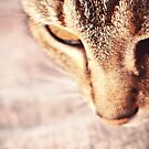 Oh little Tabetha, you are a nosy kitty.  by Fiona Christensen
