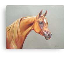"""Arabian horse study"" Metal Print"