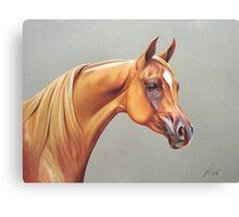 """Arabian horse study"" Canvas Print"