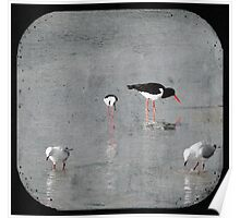 Two Gulls, One Stilt and One Oyster Catcher Poster
