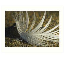 Feather drifting Art Print