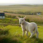 Isle of Skye Lamb by ScottishVet
