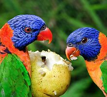 Two Rainbow Lorikeets Share A Pear. by Nick Griffin