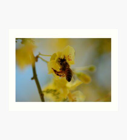 Pollen Gatherer Art Print