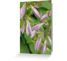 Beauty Yet To Come Greeting Card