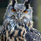 Gandalf the Eagle Owl by Paul Messenger