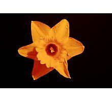 Bright Star Photographic Print