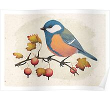 Chickadee on a branch of gooseberries Poster