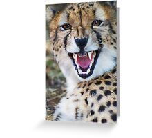 Cheetah with attitude Greeting Card