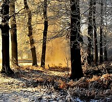 Lightplay on a hoarfrost morning by jchanders