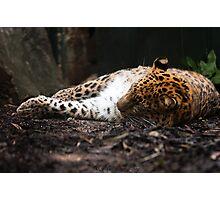 Lightly Sleeping Photographic Print