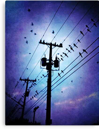 starling you were right i am the jealous kind by Jeff Clark