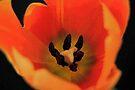 Tulip Fire by RebeccaBlackman