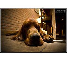 Very Sleepy Pooch Photographic Print