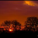 Red Sunset Through Trees by Adam Kennedy